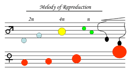 Melody of Reproduction